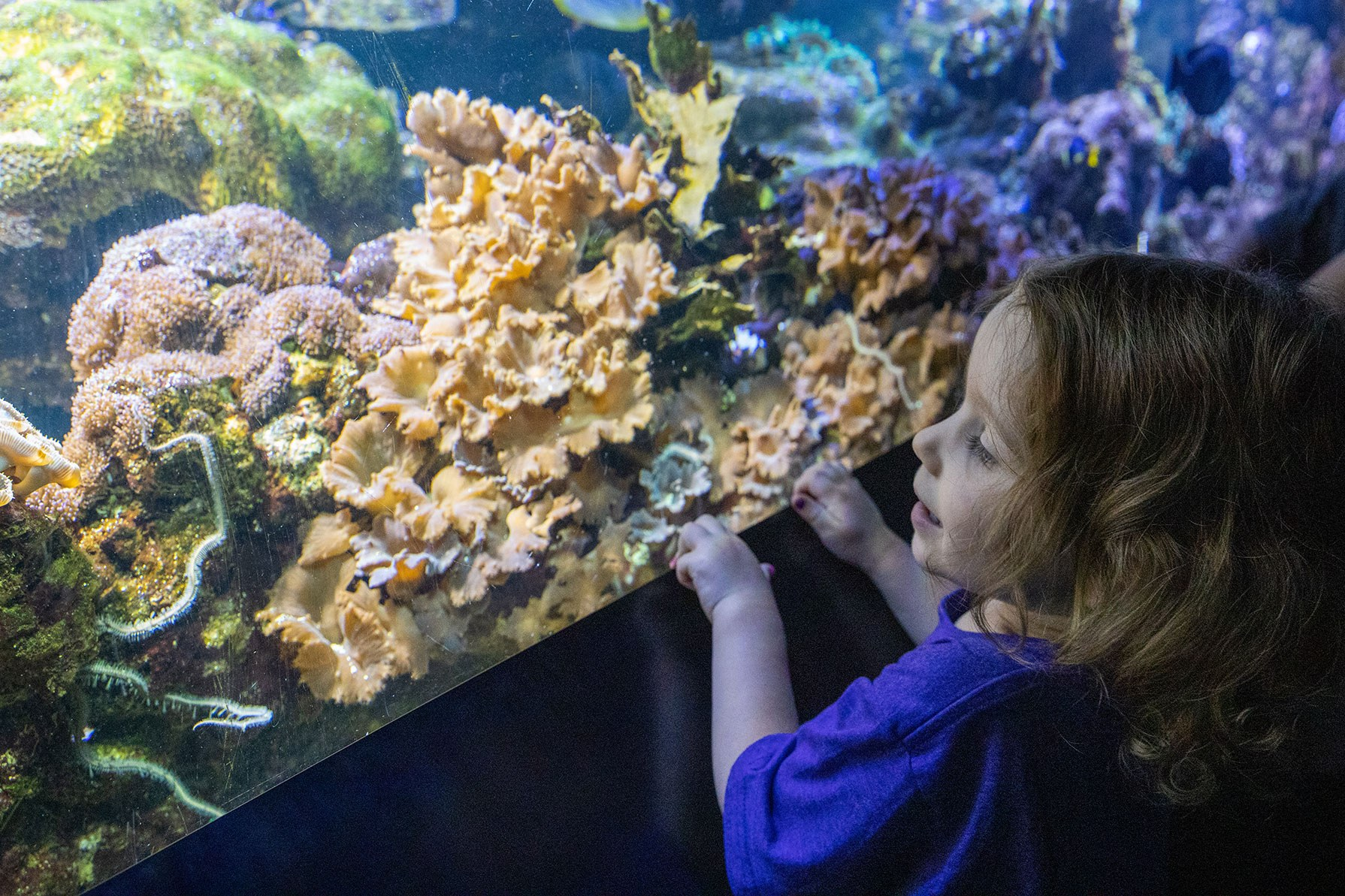 Child Looking at Coral in an Exhibit